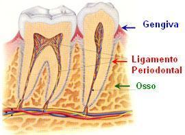 Periodontia - Siga Ortodontia e Implantes - DF